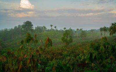 The New Commitment: Our Own Cocoa Forests