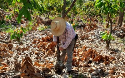 The life of a Colombian Cacao Farmer