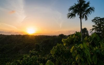 Cocoa, Forests and Peace