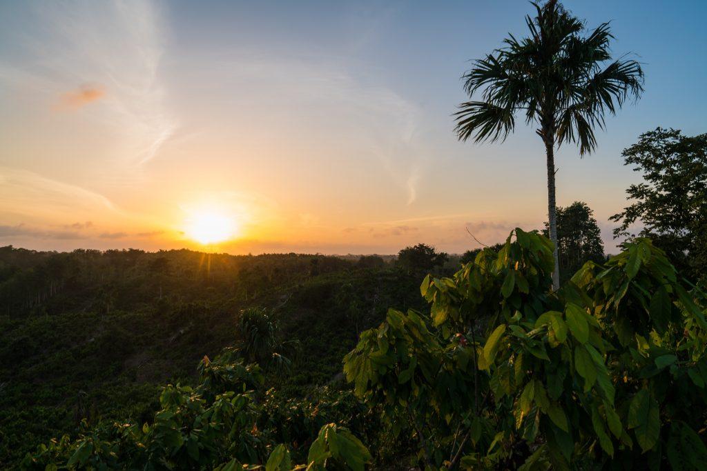 protección y restauración de los bosques de cacao