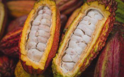 Cacao Fino de Aroma Colombiano, el Ingrediente detrás de Luker Chocolate