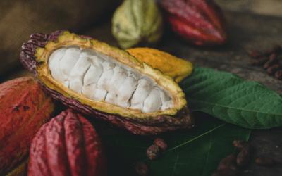 ¿A qué sabe el cacao de origen colombiano?