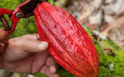 5 steps to creating a single origin chocolate