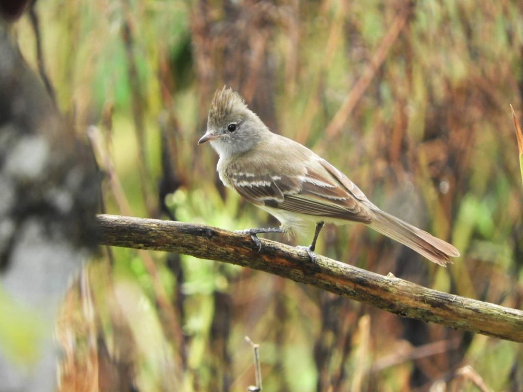 Bird watching Colombian Ornithological Association